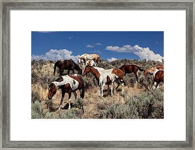 Feral Filly Nursing Framed Print