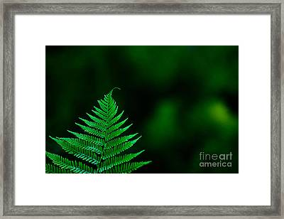 Fern 2012 Framed Print by Art Barker