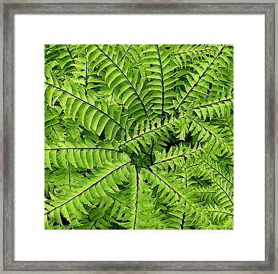 Fern Abstract Framed Print by Brian Chase