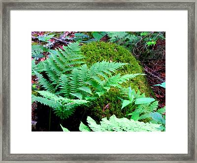 Fern And Moss Framed Print