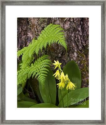 Fern And Wild Flowers Framed Print