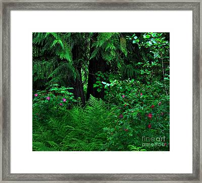 Fern And Wild Roses Framed Print