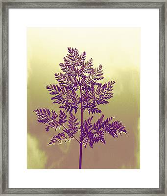 Fern Framed Print by Andrea Dale