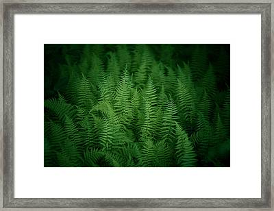 Fern Bed Framed Print