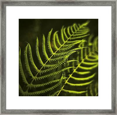 Fern Framed Print by Bradley R Youngberg
