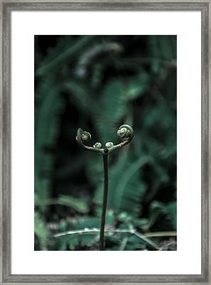 Fern Bud Framed Print