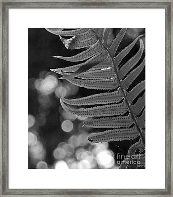 Fern Detail Framed Print