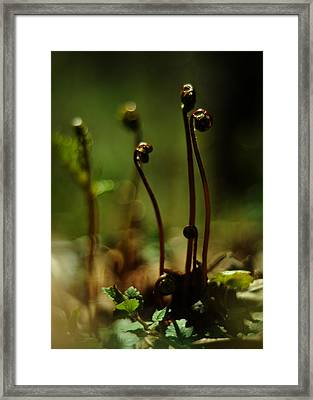 Fern Emergent Framed Print
