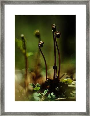 Fern Emergent Framed Print by Rebecca Sherman