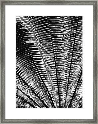 Fern Frond Framed Print by Steven Ainsworth
