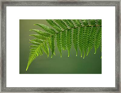 Fern Frond With Drip Tips Framed Print