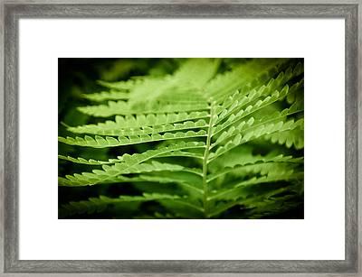 Fern Framed Print by Gabriel Lopez