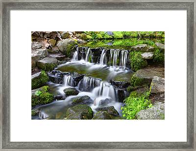 Fern Grotto Framed Print