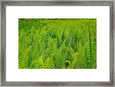 Fern Gully On Plum Island Framed Print by Carol Toepke