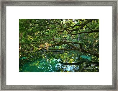 Fern Hammock Framed Print by Adam Jewell