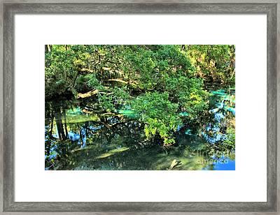 Fern Hammock At Juniper Springs Framed Print by Adam Jewell