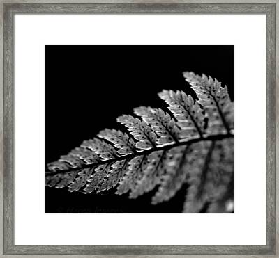 Fern In Cameo Framed Print