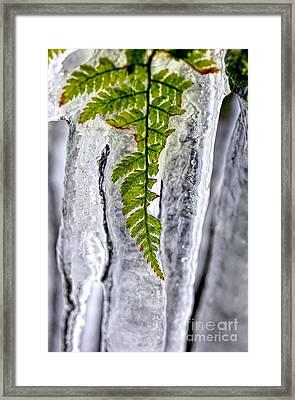 Fern In Ice Framed Print by Dan Friend