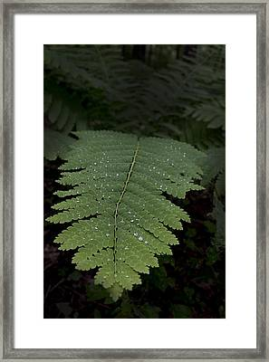 Fern In The Dark Framed Print