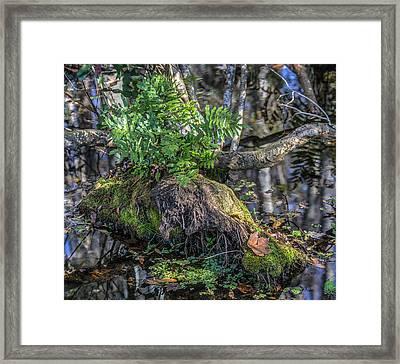 Fern In The Swamp Framed Print