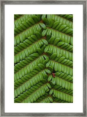 Fern, Kula Botanical Garden, Upcountry Framed Print