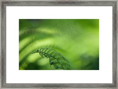 Fern Leaf 1. Healing Art Framed Print