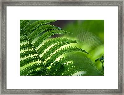 Fern Leaf 2. Healing Art Framed Print by Jenny Rainbow