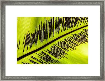 Fern Leaf Framed Print