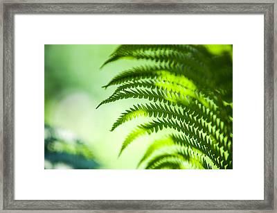 Fern Leaf Lit With Light. Healing Art Framed Print