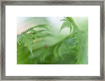 Fern Leaves Dance. Healing Art Framed Print