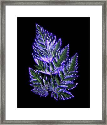 Fern Leaves Framed Print