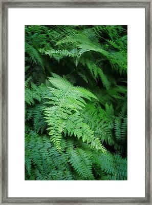 Fern Portrait Framed Print by Bill Wakeley