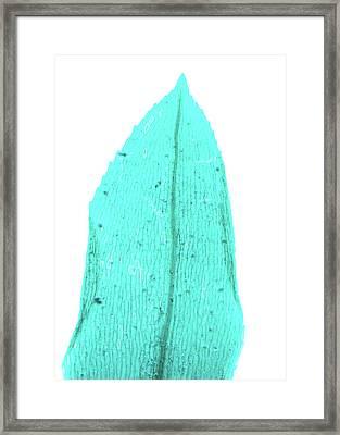 Fern Prothallus Framed Print by Pan Xunbin