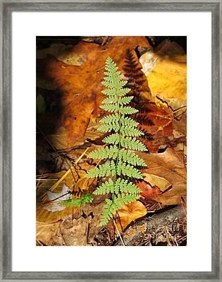 Fern Shadow Framed Print by Linda Marcille