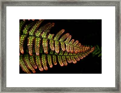 Framed Print featuring the photograph Fern by Sonya Lang