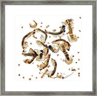 Fern Spore Capsules Framed Print