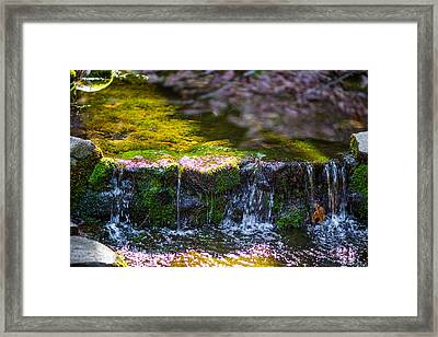Fern Spring Framed Print by Mike Lee