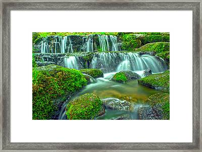 Fern Spring Reflections Of An Overcast Day Framed Print