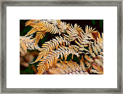 Fern With Frost. Framed Print by Tommytechno Sweden