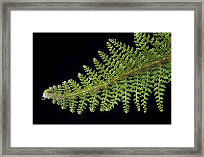 Framed Print featuring the photograph Fern With Raindrop 2 by Trevor Chriss