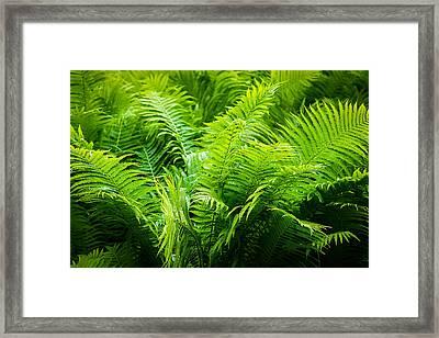Ferns 2 Framed Print by Alexander Senin