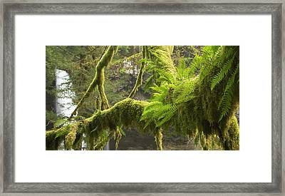 Ferns And Moss Growing On A Tree Limb Framed Print