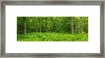 Ferns Blanketing Floor Of Summer Woods Framed Print by Panoramic Images
