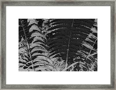 Ferns Framed Print by Colleen Cannon