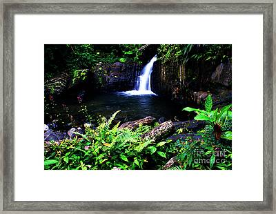 Ferns Flowers And Waterfall Framed Print by Thomas R Fletcher
