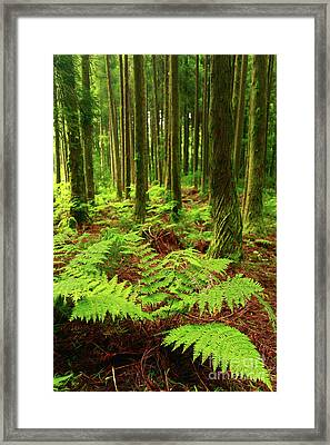 Ferns In The Forest Framed Print