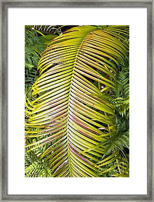 Framed Print featuring the photograph Ferns by Kate Brown