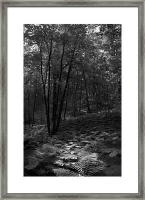 Ferns Framed Print