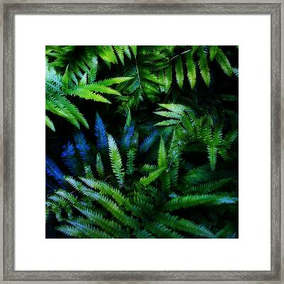 Ferns Framed Print by Matt Lindley