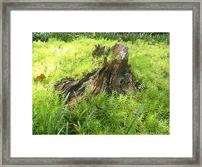 Framed Print featuring the photograph Ferns Of The Forest by Jodi Terracina